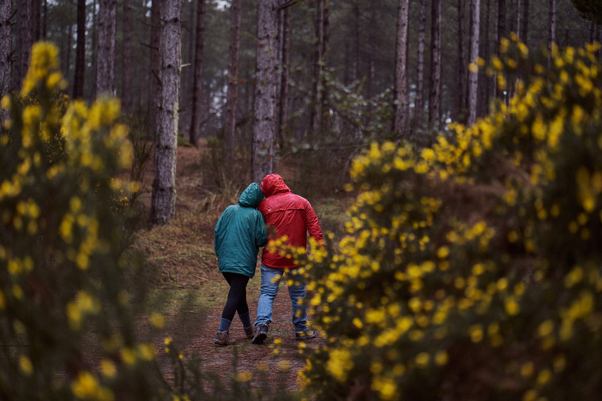 couple having a romantic stroll through the woods,