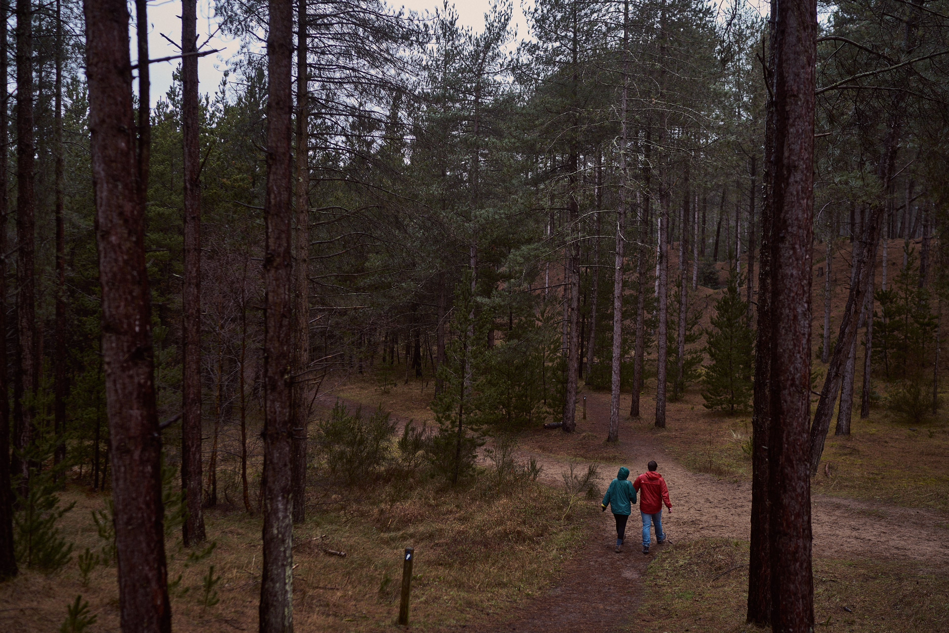 Couple walk hand in hand through the woods, it's a secret that he's going to propose