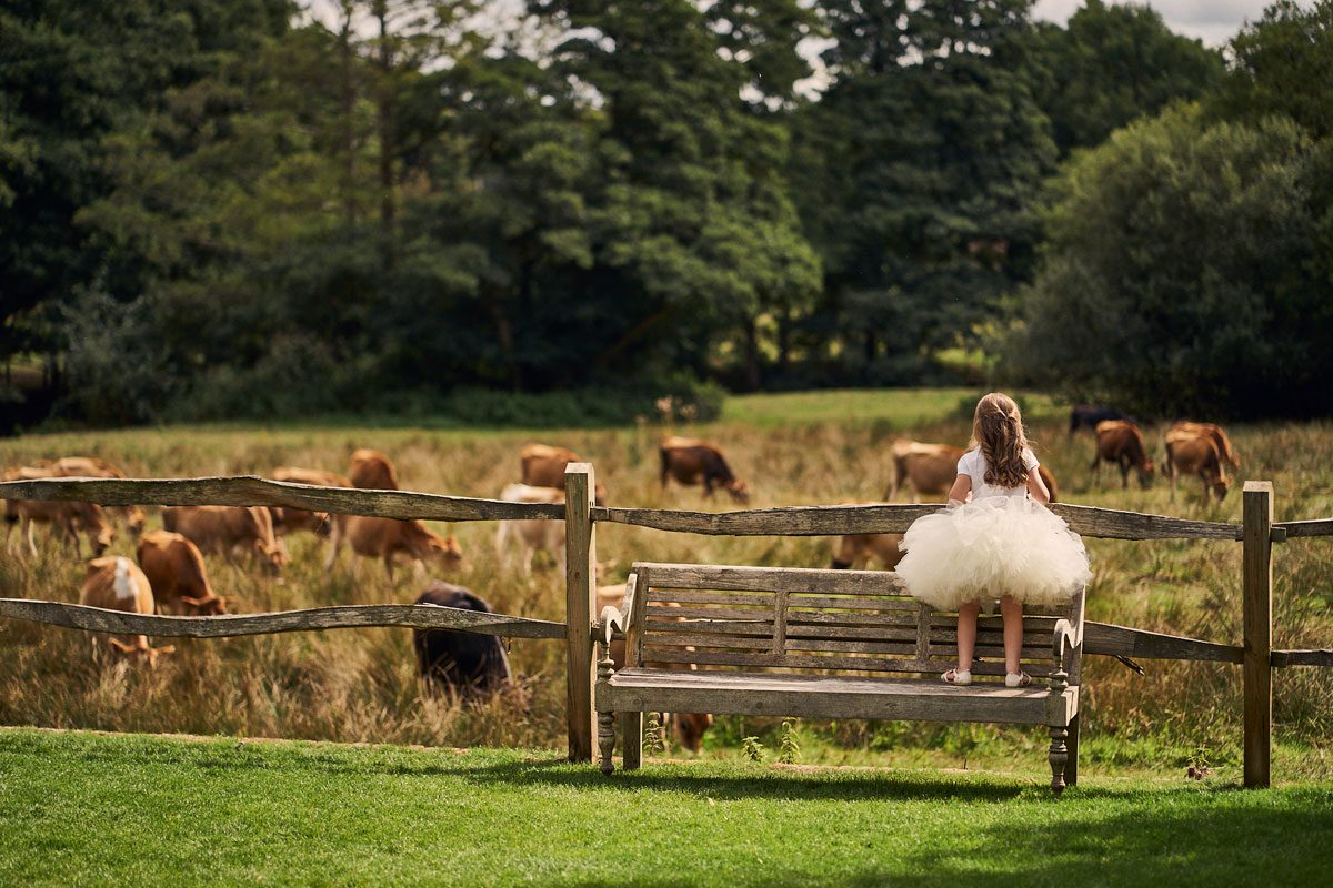 flower girl climbing the fence to look at the cows